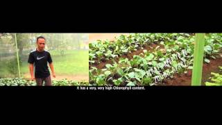 From Garden City To Edible City: Bjorn Low & Calvin Soh At TEDxSingaporeManagementuniversity