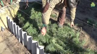 Надежное укрытие винограда на зиму видео