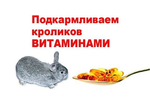 , title : 'Подкармливаем кроликов ВИТАМИНАМИ