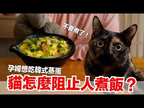 好味小姐!料理韓式蒸蛋,連貓咪都賞臉!