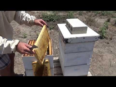 пчеловодство .осмотр через 2 недели 3/6/2017