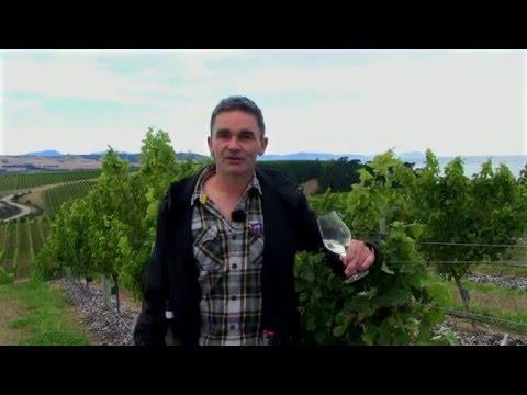 Tìm hiểu về vùng nho Marlborough của New Zealand