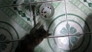 Bẫy Mèo đơn giản nhất (The simplest Cat traps the world)