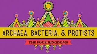 Old&Odd: Archaea, Bacteria&Protists - CrashCourse Biology #35