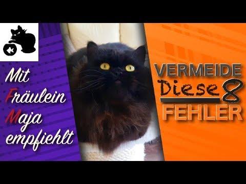 🔥8 Katzen Tipps - Vermeide unsere 8 Fehler - Mit Fräulein Maja empfiehlt - Tipps zur Katzenhaltung