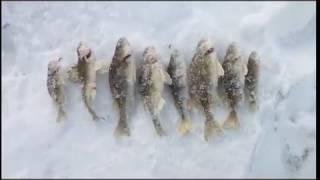 ловля ерша на реке быстрая сосна 2.02.2017