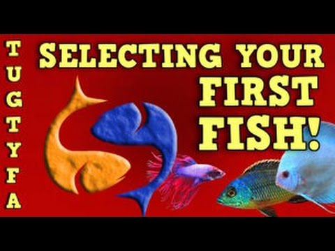 Selecting Your First Fish, The Ultimate Guide To Your First Aquarium Ep. 2