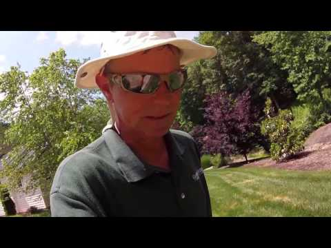Video How To Control Disease in Tall Fescue Lawns. Brown Patch, Pythium.