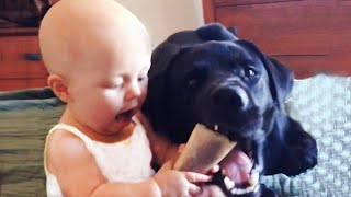 Funny Baby and Dog Are BFFs | Funny Baby Video | Fun and Cute