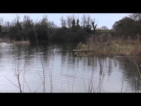 PRIOR'S CARP FISHERIES, BERWICK PONDS FARM, BERWICK POND ROAD, ESSEX