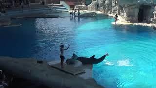 Laguna Oltremare  Spettacolo  Dei Delfini 26.07.2017