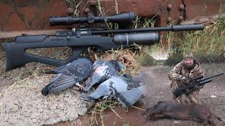 Airgun Hunt: .22 Bantam on Pigs and Pigeons