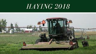 Haying 2018 thumbnail