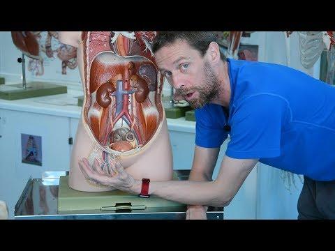 Umflarea genunchiului în varicoză
