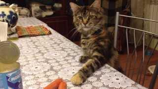 Смотреть онлайн У кота не получилось украсть сосиску со стола