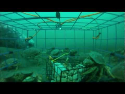 Underwater Videos On Crab Traps And Fishing I Find The Movements Of Crabs Interesting To Watch They Are Incredibly Robotic But Also Fast Fluid