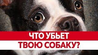 Что НЕЛЬЗЯ СОБАКАМ? Продукты вредные для собак! Вреден ли шоколад для собак?