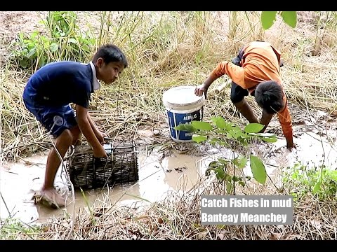 Young Boys Catch Fishes in Mud at Banteay Meanchey province in Cambodia