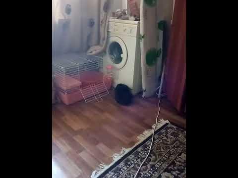 Мой друг кролик Крош