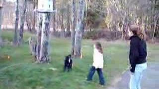 mini barking at a bird feeder
