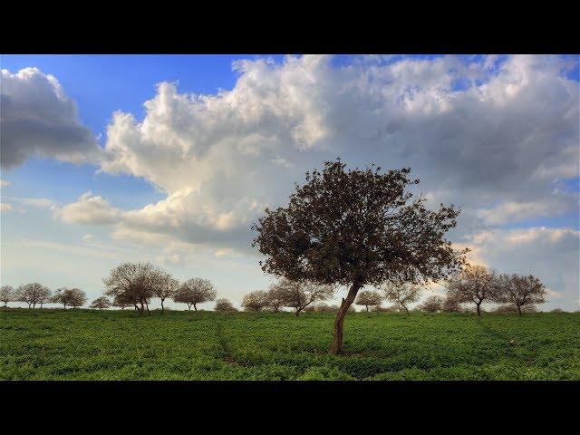The Amidah | My Jewish Learning