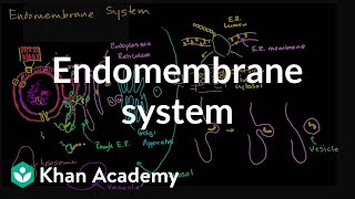 Endomembrane System   Structure Of A Cell   Biology   Khan Academy