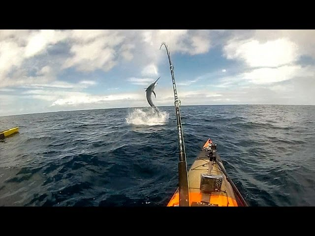 Catching Marlin from a kayak, Coffs harbour
