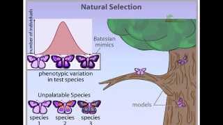 Natural Selection - Types of Selection