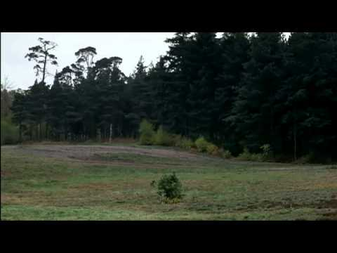 Monty Python - Как правильно прятаться