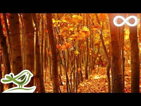 Fall Asleep Fast: Deep Relaxing Music, Sleep Music, Meditation Music, Sleeping Music ★135