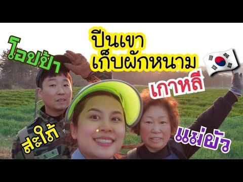 ไปเก็บผักหนามเกาหลีบนภูเขาสนุกมาก/ภาค1/EP.98/โอปป้า/เเม่บ้านเกาหลี/ประเทศเกาหลีใต้/สะใภ้เกาหลี