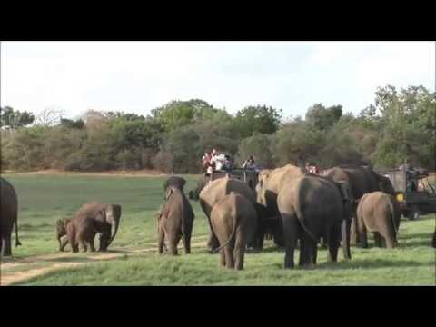 Minneriya National Park, Sri Lanka. July 2016