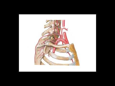 Cisti di Baker risonanza magnetica del ginocchio