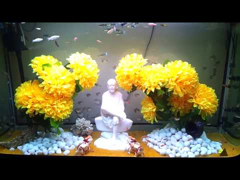 AQUARIUM DECORATION IDEAS II AQUARIUM TANK 350 LITRES II BEST CREATION AT HOME