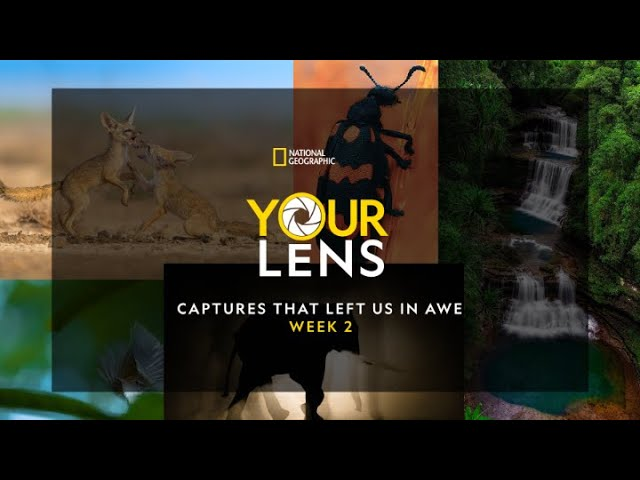 Your Lens: Captures that left us in awe   Week 2