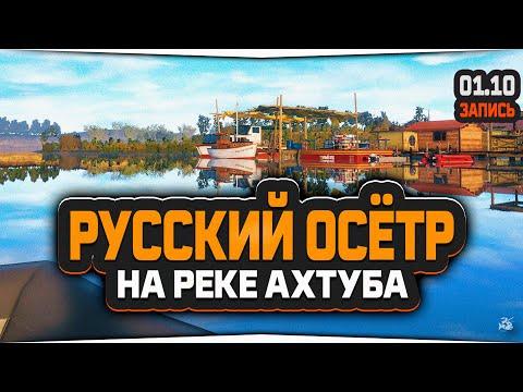 Русский осётр