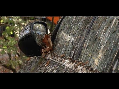 Singlehoroskop steinbock august 2019