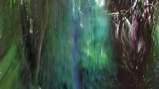 "Plan""B"", Glenbervie Forest, Whangarei, NZ"