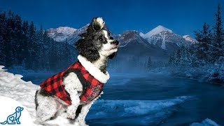 Dog Coats For Small Dogs- How To Pick The Right One