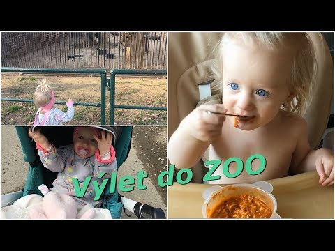 Výlet do ZOO   MamaVlog