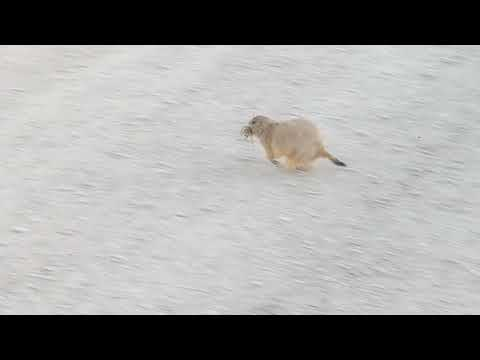 prairie dogs are fun to watch