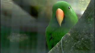 World Of Birds Wildlife Sanctuary, Monkey Park Battles To Stay Open