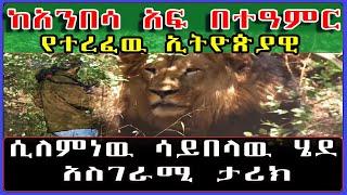 Ethiopia: ከአንበሳ አፍ በተዓምር የተረፈዉ ኢትዮጵያዊ አስገራሚ ታሪክ። [ሲለምነዉ ሳይበላዉ ሄደ] /መሴ ሪዞርት/ #SamiStudio