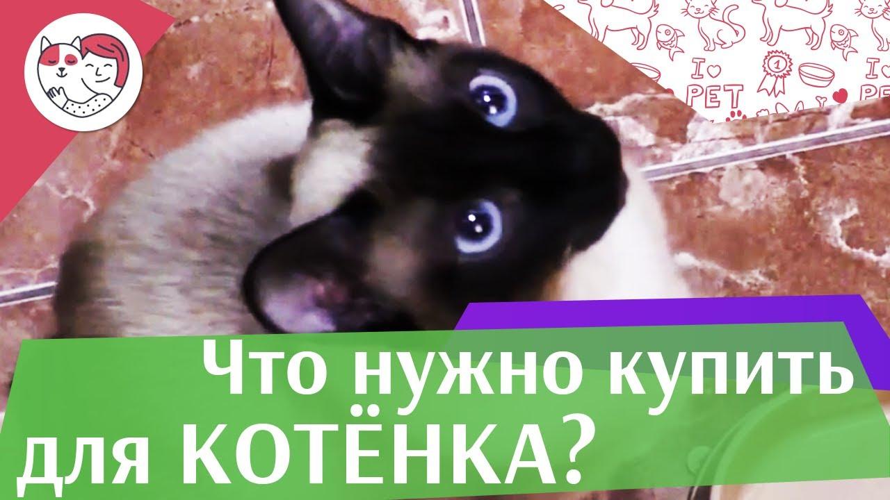 Стартовый набор для котенка на ilikepet