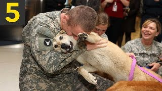 Top 5 Dogs Welcoming Home Soldiers - Good Feels