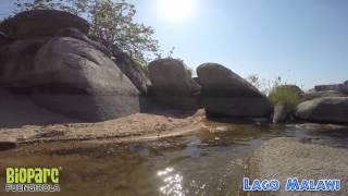 Snorkel En El Lago Malawi 1