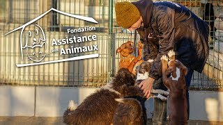 """Merci au refuge de Morainvilliers de la Fondation Assistance aux Animaux pour toute l'aide et le bonheur qu'ils offrent aux animaux abandonnés ! http://www.fondationassistanceauxanimaux.org/refuge-animaux-morainvilliers/    Tous leurs refuges sont ouverts à tous et toute l'année!  Vous trouverez toutes les adresses ici : http://www.fondationassistanceauxanimaux.org/refuges-animaux/    Un peu plus d'informations sur les animaux croisés dans cette vidéo :  - Milou Très joueur, il s'entend avec ses copains chien. Il attend une famille au refuge depuis bien trop longtemps, il était au Noël des Bêtes mais personne ne l'a regardé :(  - Praline C'est la chienne de l'entrée que j'ai réussi à calmer en la caressant. Elle est née en janvier 2012, elle a été saisie avec ses chiots par la Fondation pour maltraitance animale il y a près de 3 ans !  Tous ses enfants ont été adoptés mais pas elle....   - Omega  C'est la petite chienne que l'association a retrouvé avec sa soeur qui a été hospitalisée : Ils recherchent activement les tortionnaires.... Deux hypothèses principales : elles ont été utilisées comme appâts pour combat de chiens ou ce sont des invendus d'élevage clandestin. Voici l'actu où tout est expliqué avec photos et vidéos : http://www.fondationassistanceauxanimaux.org/actu/chiots-medan-temoins-3435/ La soeur s'appelle Hanoï, elle est en hospitalisation.  - Chiots (la grise et la marron) En attendant d'être vendus, ils étaient dans un squat... sans eau ni nourriture, dans leur excrément. Voici l'actu où tout est résumé : http://www.fondationassistanceauxanimaux.org/actu/chiots-saisis-3307/     """"Je veux un chiot"""" / """"Je veux un chaton"""";  Il ne faut pas oublier que avant d'être un jeune chien de 1 an ou un jeune chat de 8 mois (par exemple), ils ont été des bébés ! À 1 an ou même à 3 ans, ils sont jeunes, dynamiques... et débordent d'amour ! Pourquoi eux, n'auraient pas le droit au bonheur ?  Il y a aujourd'hui beaucoup trop de cas connus de maltraitance dont les témoin"""