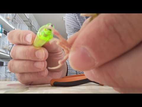 Dove controllare unghie per un fungo in Minsk