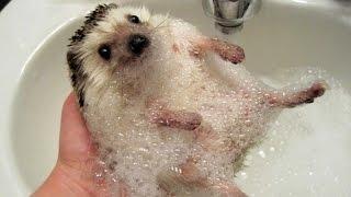 Funny ANIMALS make us laugh - Funny animal compilation