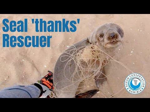 Rescued Baby Seal Says Thanks